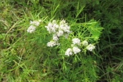 Unknown Plant #1