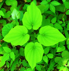 4 square leaf pattern